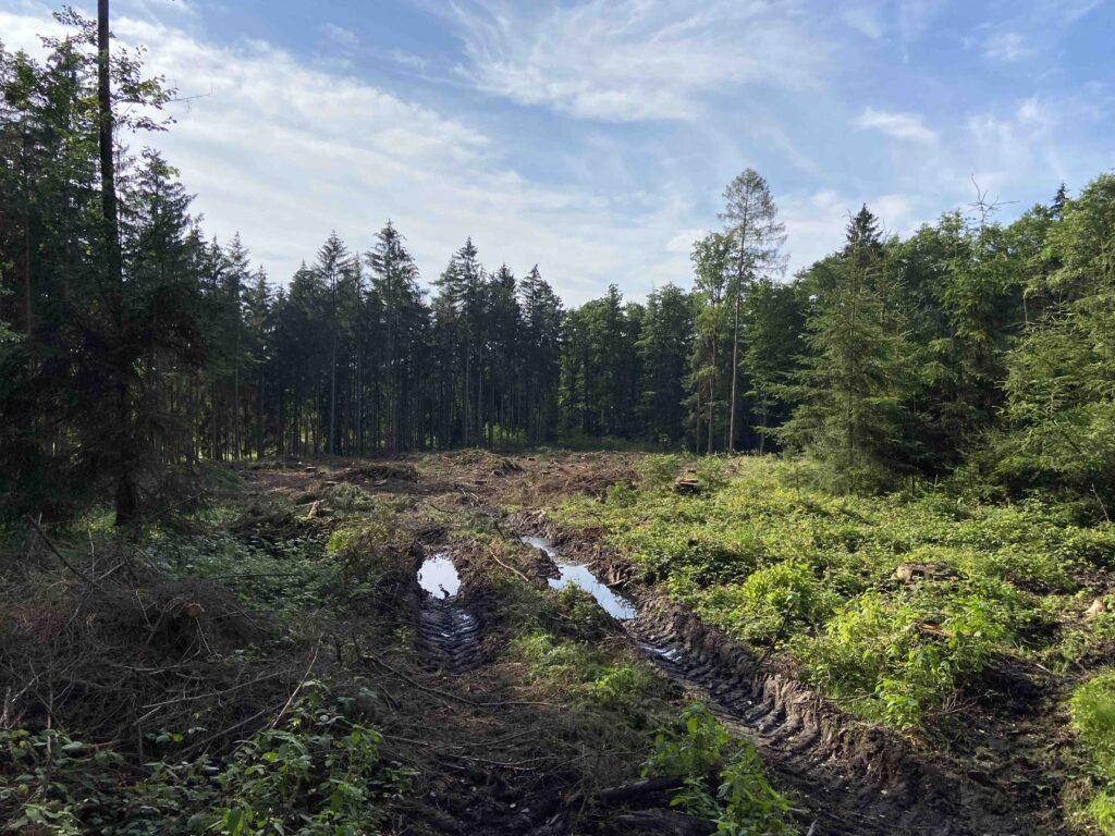 obnova lesů - během pomůžeš